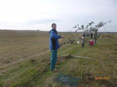 Výsadba stromořadí