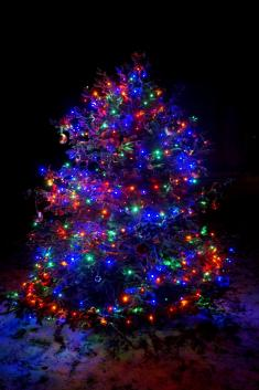 Rozsvícení vánočního stromu a betlému